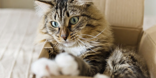Why Your Cat Is So In Love With Boxes