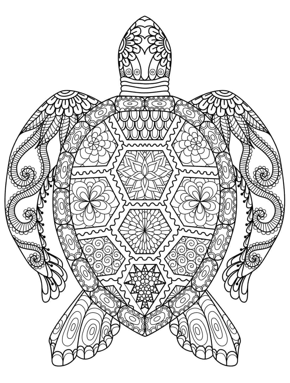 Seeschildkröte Malvorlage