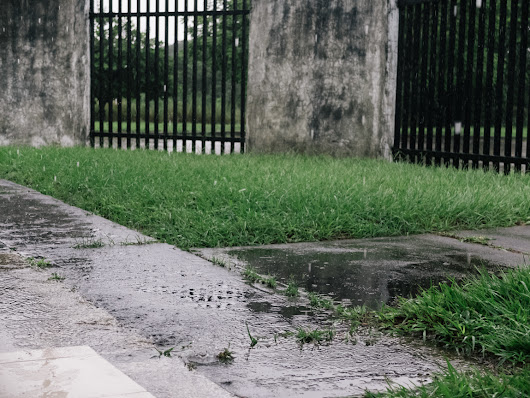 My Week in Pictures – After The Rain • Pablo E. Peña P.