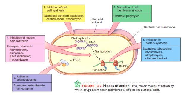 Mekanisme dan Penyebab Bakteri Kebal Antibiotik oleh ...