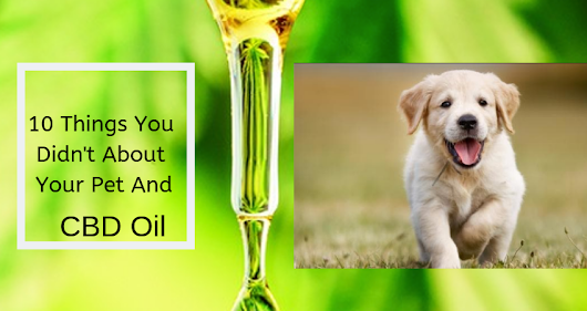CBD Oil For Pets: 10 Things You Didn't Know – Empowering You To Success