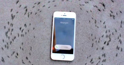 Why the ants in this video kept crawling around an iPhone