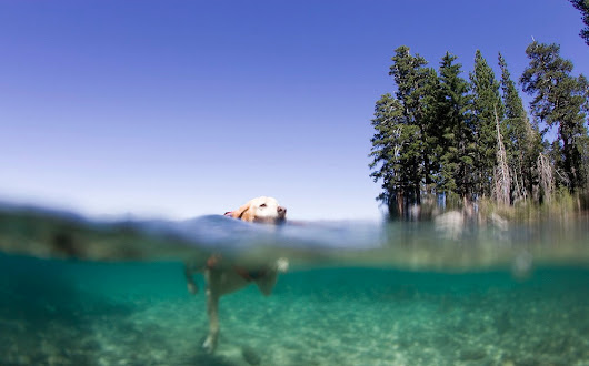 Dog-Friendly Activities in South Lake Tahoe
