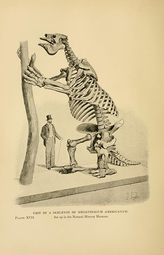 Cast of a Skeleton of Megatherium americanum
