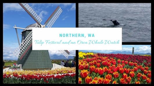 Northern, WA - Tulip Festival and an Orca Whale Watch! - T and A in the US of A