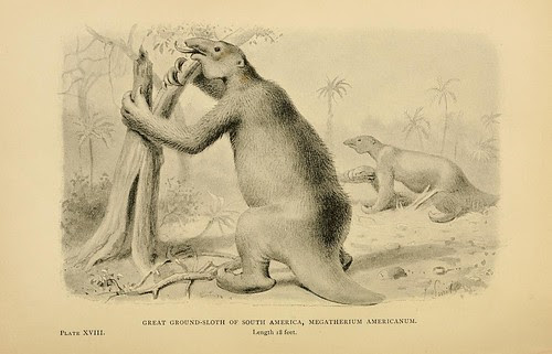 Great Ground-Sloth of South America, Megatherium americanum