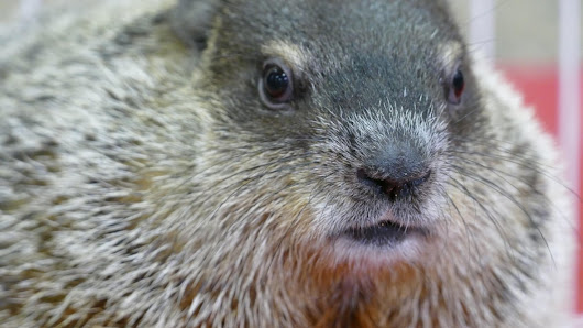 Groundhog Day 2018: How soon is spring?