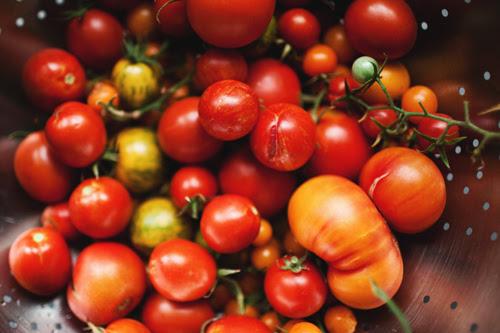 tomato1 copy