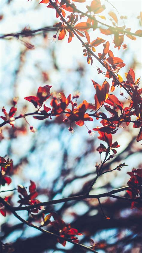 autumn inspired iphone   wallpapers autumn