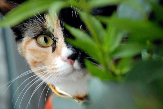 ¿Cuántos gatos puede tener una gata primeriza?