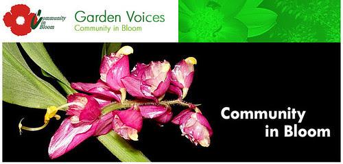 Garden Voices blog