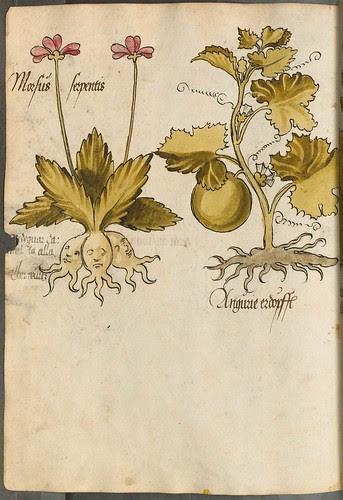 Arzneipflanzenbuch, 1525 p