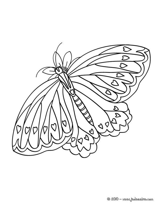Coloriages De Papillons Coloriages Coloriage à Imprimer Gratuit