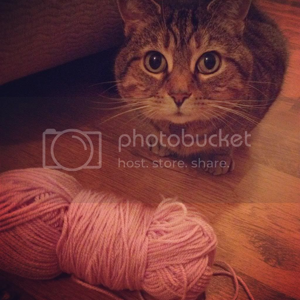 genghis-cat-helping-with-crochet