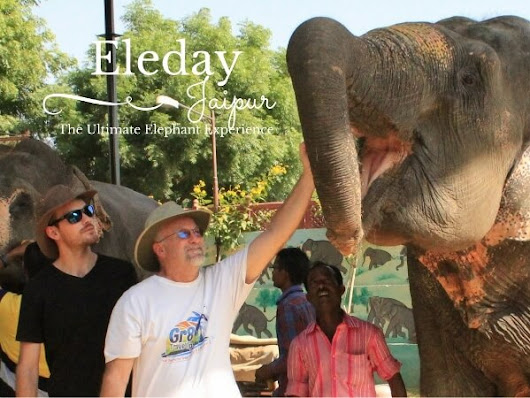 Discover Some Amazing Jaipur Elephant Parks - Gr8 Travel Tips
