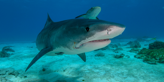 5 Things You Should Know So You Can Love Sharks