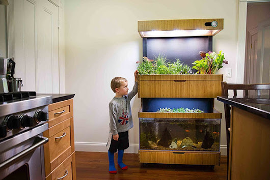 Awesome New Self-Sustaining Garden And Aquarium Combo - Unshootables