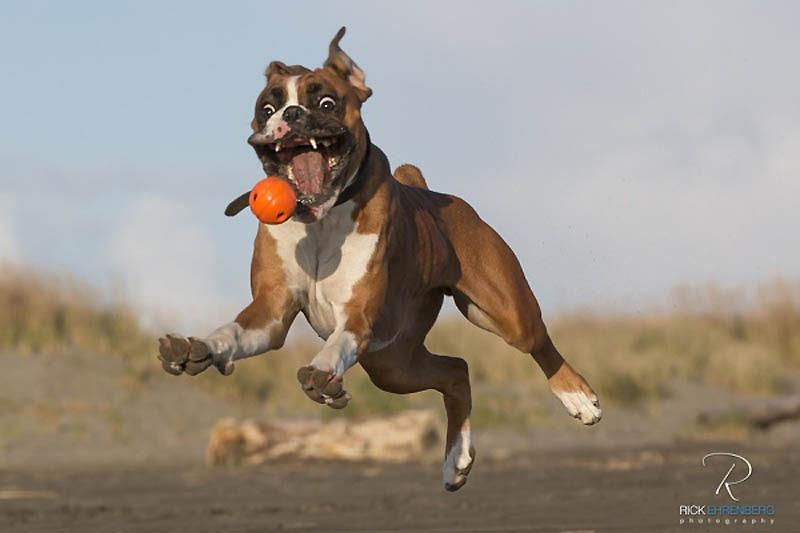 2731 40 самых удачных фотографий животных, сделанных в нужный момент