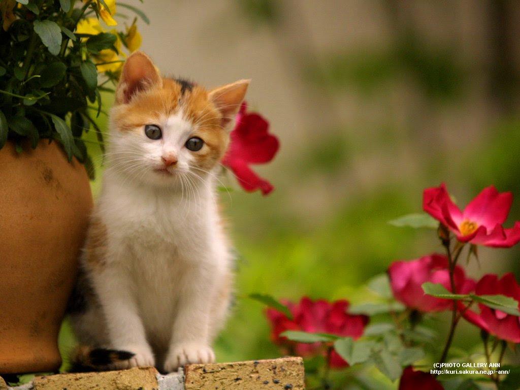 Ynpp wa · kuda, kucing bayi, serigala, bayi hewan, gambar hewan lucu, john lennon. 91 Gambar Kucing Untuk Profil Wa Paling Keren Gambar Pixabay