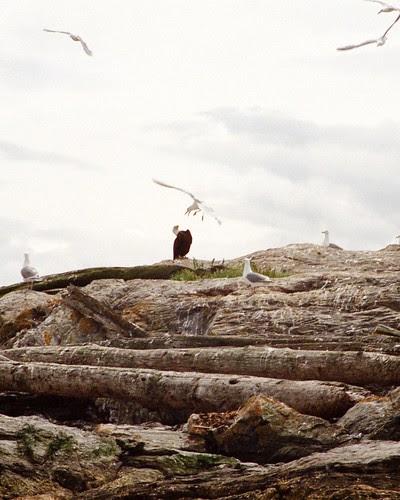 Eagle and Seagull