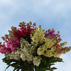 Stock Flowers 40 Stems Assorted Colors by GlobalRose