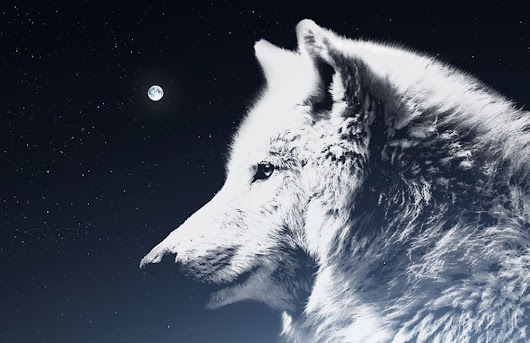 Descended From The Wolf? Myths And Traditional Beliefs