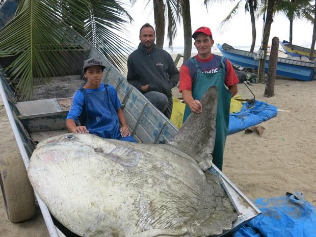 Peixe foi pescado na noite deste domingo (3) (Foto: Anna Gabriela Ribeiro/G1)