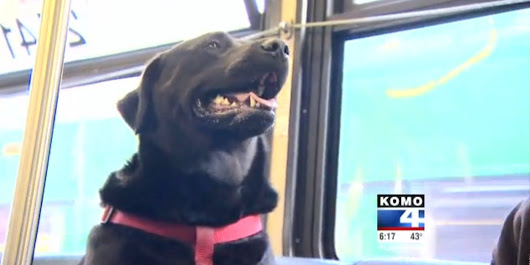 Seattle Dog Figures Out Bus, Regularly Rides To Dog Park Solo