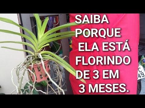 COMO FAZER ORQUÍDEA VANDA FLORIR EM APENAS 3 MESES..!!