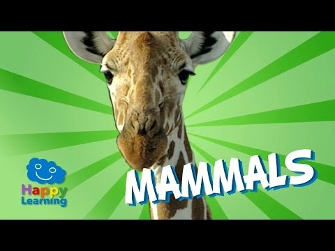 What animals are considered mammals? – Mammals 4 Kids