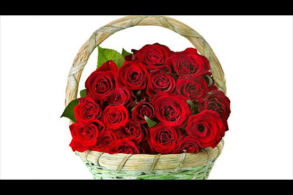 Beautiful Flowers Pictures Red Roses