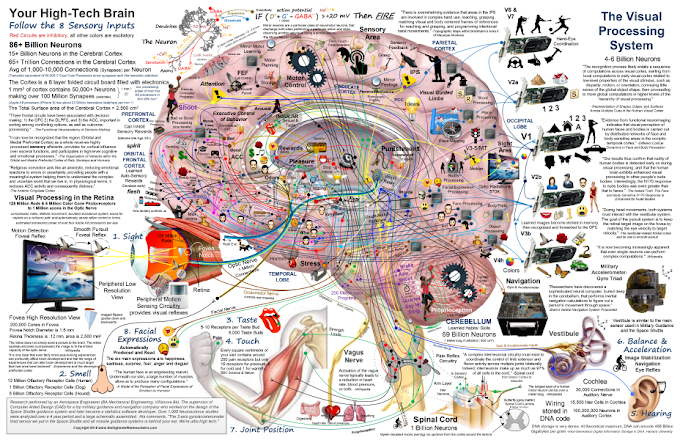 Brain Maps : Introducing Your Hi-Tech Brain