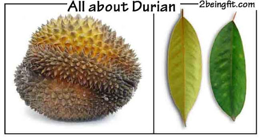 Durian – nutrition, proven benefits, uses