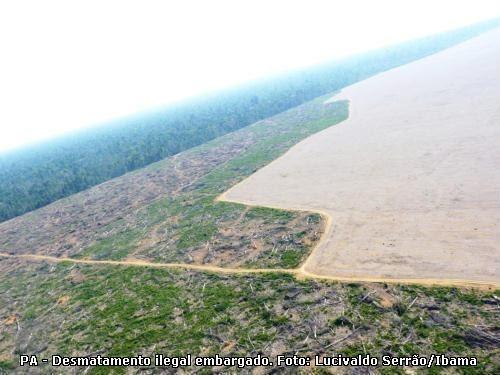Alertas de desmatamento na Amazônia Legal sobem 26% em seis meses