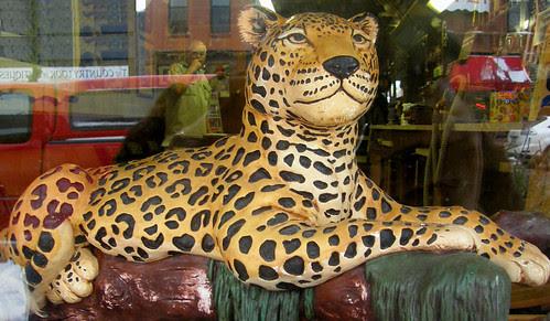 cheetah_excelsior