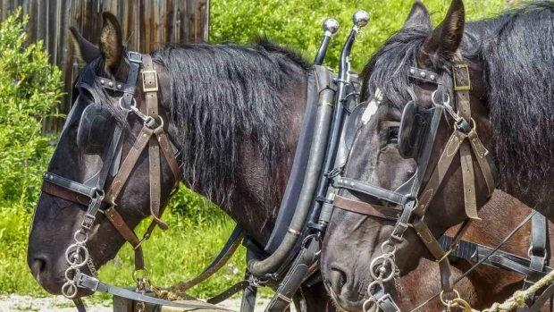 ¿Cómo transportar a tu caballo?