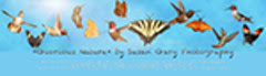 Glorious Nature Art Overlays and Textures III blog banner 2013