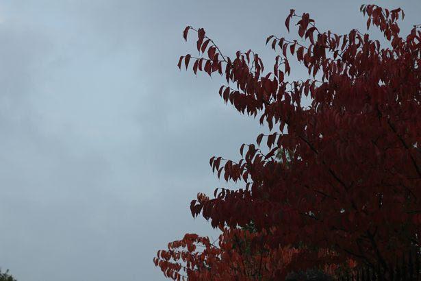 photo autumn8_zps185dc303.jpg