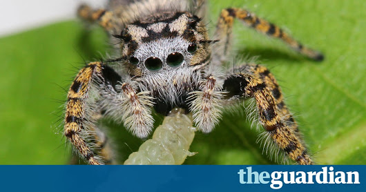 World's spiders devour 400-800m metric tons of insects yearly – experts | Environment | The Guardian