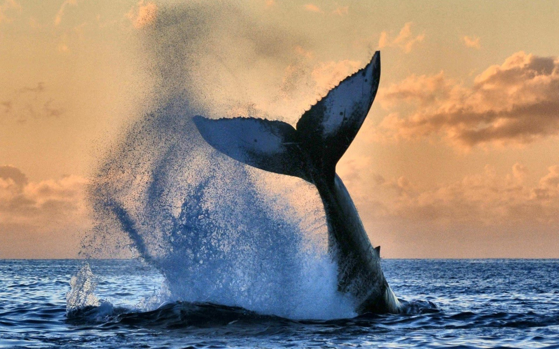 1920x1200 Px Animals Nature Sea Sky Whale High Quality Wallpapers Images, Photos, Reviews