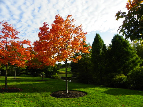 Chicago Botanic Garden (19)