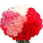 100 Mother ́s Day Carnations Bulk Prices by GlobalRose