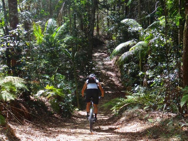 Eumundi Rain Forest