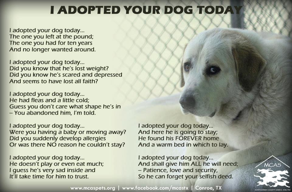 Quotes About Shelter Dogs 27 Quotes