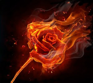 burning rose 2