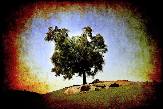 Lone Tree On The Hill by Milena Ilieva