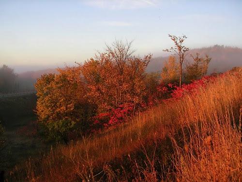 Orillia - October Mist
