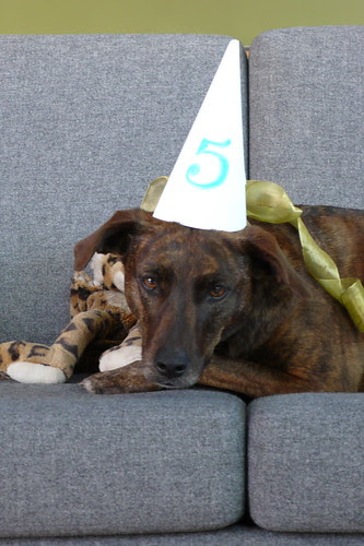 lola's 5th birthday