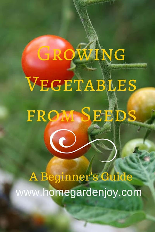 A Beginner's Guide to Growing Vegetables from Seeds - Home Garden Joy