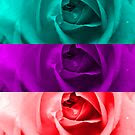 Rainbow Rose by JuliaFineArt